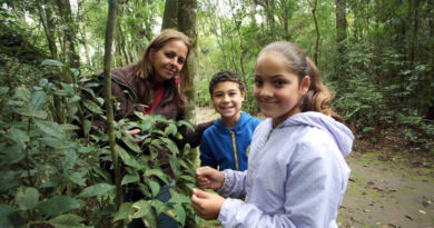 Brasil recebe prêmio da ONU por programa de sustentabilidade