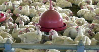 Ministério emite nota sobre caso de coronavírus em ave exportada para China
